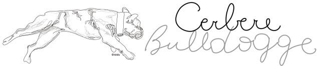 cebere-bulldogge